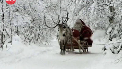 The Reindeer of Lapland
