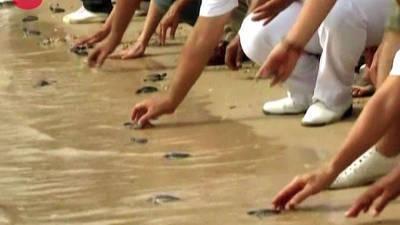 Baby Sea Turtles Released
