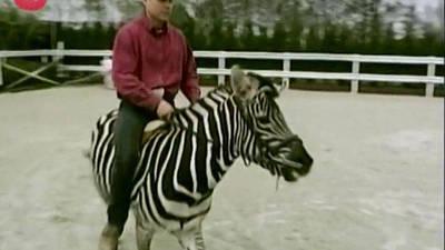 Man Rides Zebra