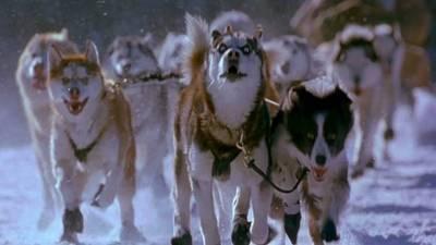 Snow Dogs Trailer