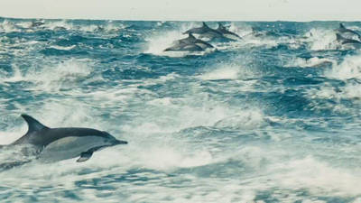 Large Herds - Disneynature: Oceans