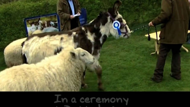 Dotty The Donkey Gets a Medal