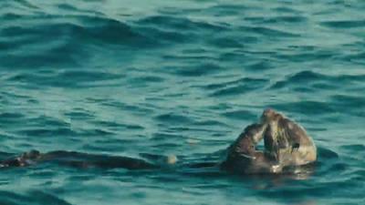 Otters - Disneynature: Oceans