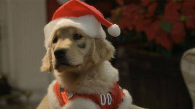 The Legend of Santa Paws Trailer