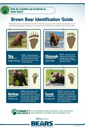 Bear ID Guide