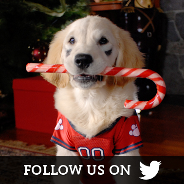 Santa Buddies Twitter