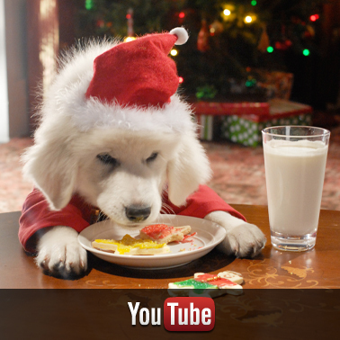 Santa Buddies YouTube