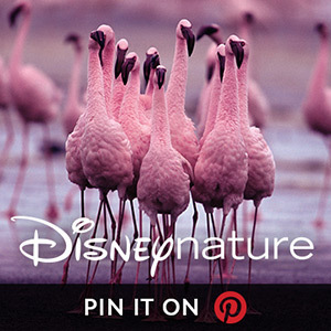 Disneynature on Pinterest