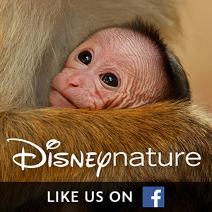 Disney Nature on Facebook