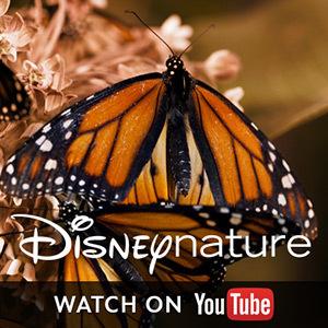 Disneynature on YouTube