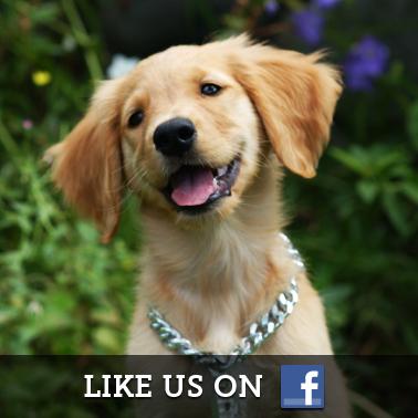 Air Buddies Facebook