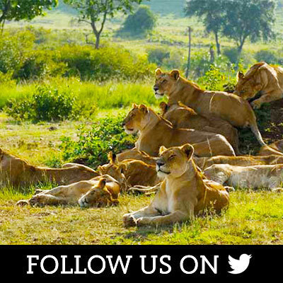 African Cats on Twitter