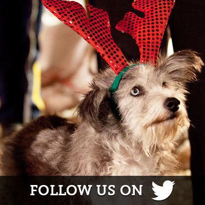 Santa Paws on Twitter