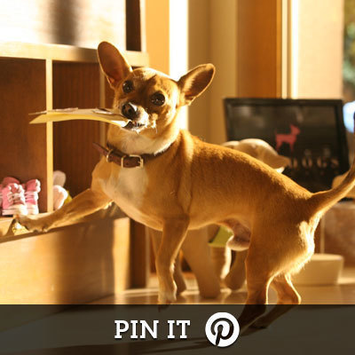 Beverly Hills Chihuahua on Pinterest