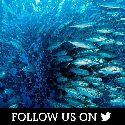 Oceans on Twitter
