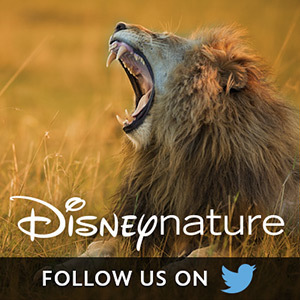 Disneynature on Twitter