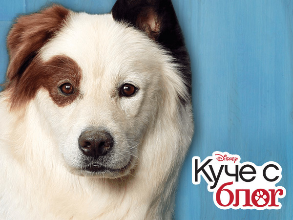Куче с блог
