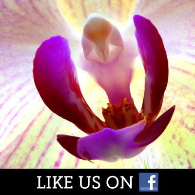 Wings of Life on Facebook