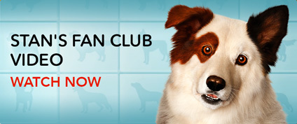 Dog with a Blog - Stan's Fan Club Video