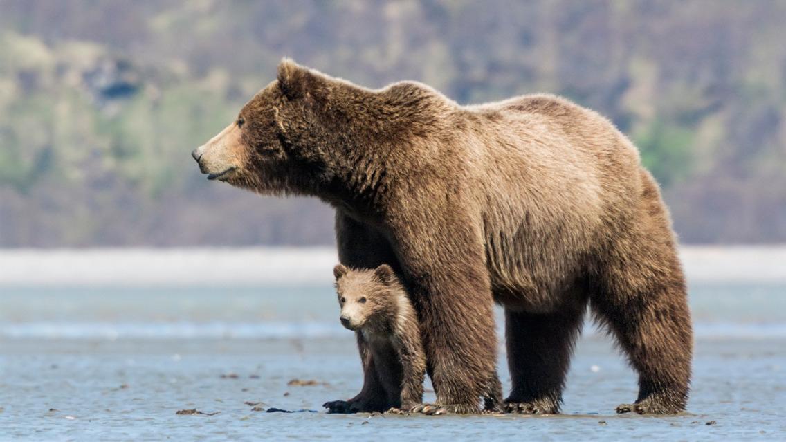 Bears Gallery