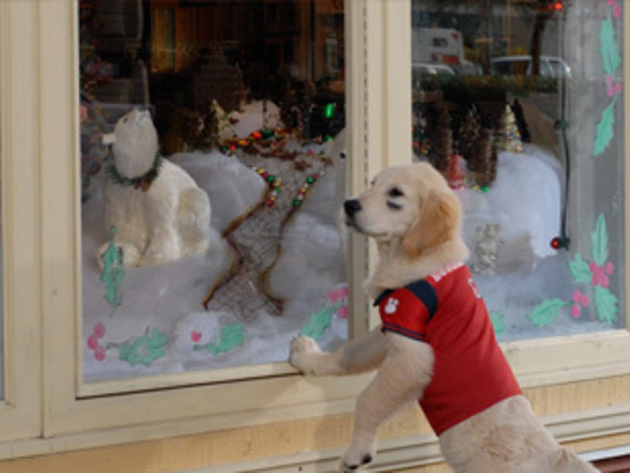 Budderball does a little window shopping.