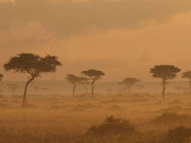 Beautiful, vast, dry, and dangerous, the African Savanna is home to the African cats.
