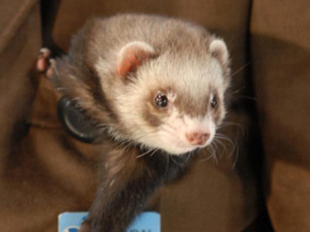 It's the gravity ferret!