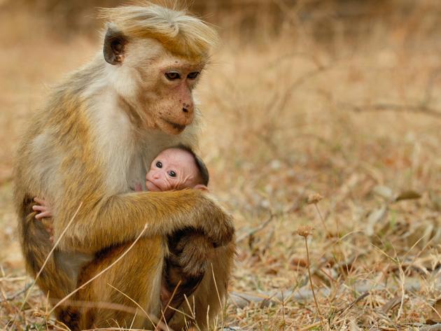 Maya and Kip- Monkey Kingdom