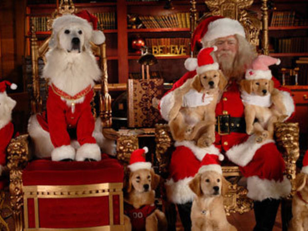 The full cast of Santa Buddies poses for a portrait.
