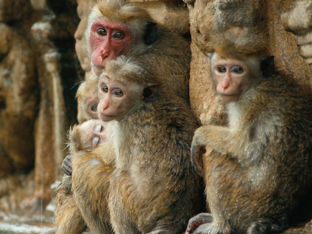 Kip in Maya's arms- Monkey Kingdom